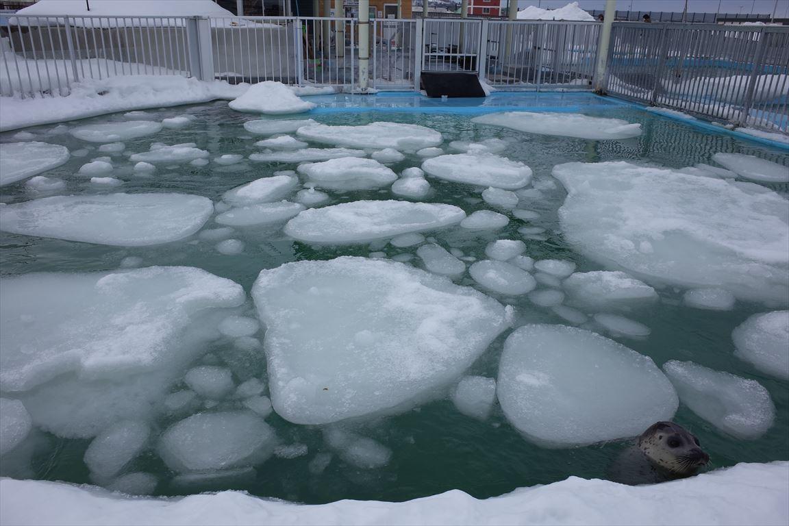 オホーツクとっかりセンターのプール