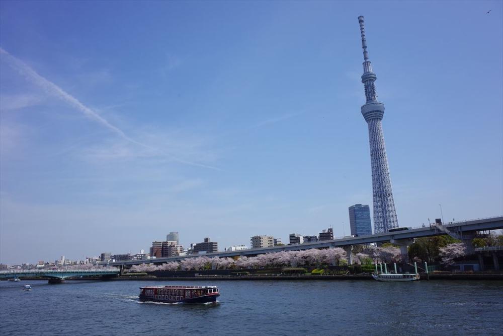 すみだリバーウォーク 桜と東京スカイツリー