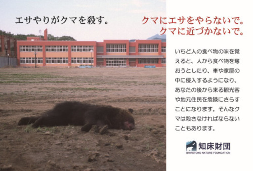 知床財団 クマにエサを与えないで